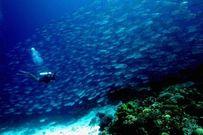 Top 10 điểm du lịch lý tưởng ở Philippine