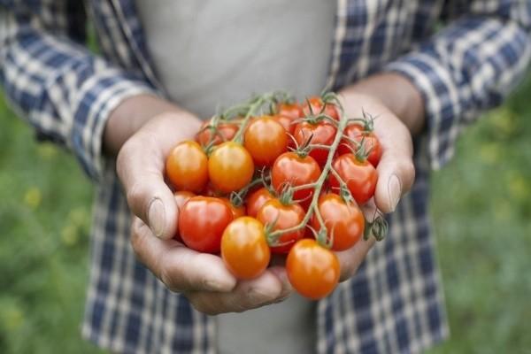 o-tomato-man-facebook