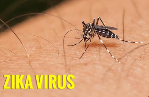 gia tang so ca mac virus zika va di tat dau nho o viet nam 1.jpg