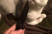 Thiếu nữ xinh đẹp tra tấn chó mèo rồi đăng lên Facebook câu like