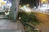 Đang đi xe máy, cả nhà bị thương vì nhánh cây rơi ở độ cao 30m