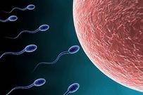 Những điều vợ chồng cần biết về thụ tinh nhân tạo để sớm đón con yêu