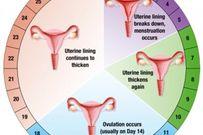 Cách tính vòng kinh cực chuẩn giúp phụ nữ tăng khả năng thụ thai