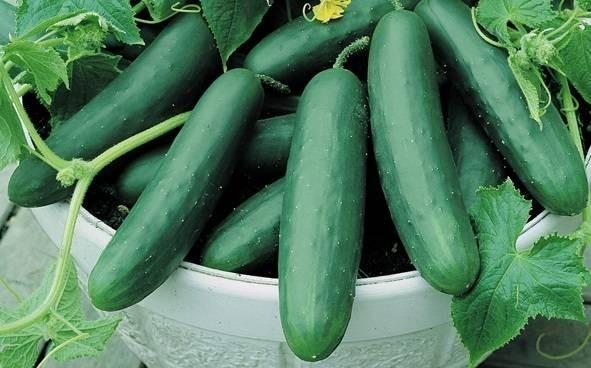 7004-cucumbers.jpg