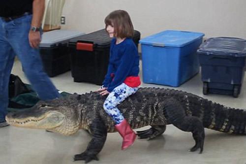 hai hung tro choi nguy hiem nhat the gioi be gai cuoi ca sau trong tiec sinh nhat this is the sickening moment a crocodiles head  2 .jpg