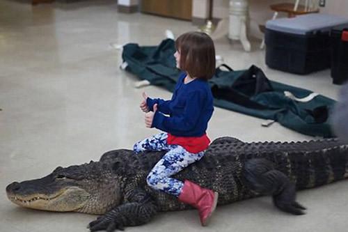 hai hung tro choi nguy hiem nhat the gioi be gai cuoi ca sau trong tiec sinh nhat this is the sickening moment a crocodiles head.jpg