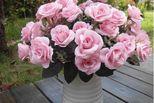 Top 8 loài hoa đại kỵ nếu chưng trên bàn thờ ngày Tết là bất kính với đấng bề trên