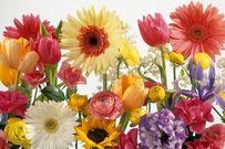 Tổng hợp những mẹo cực hay giữ cây cảnh, hoa tươi lâu trong 3 ngày tết