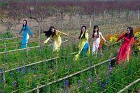 6 làng hoa Tết ba miền khoe sắc thu hút du khách tham quan dịp đầu năm